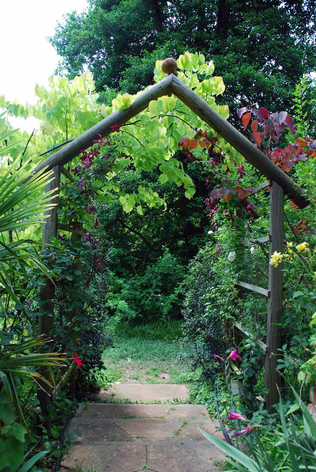 Flowering Vines And Climbers