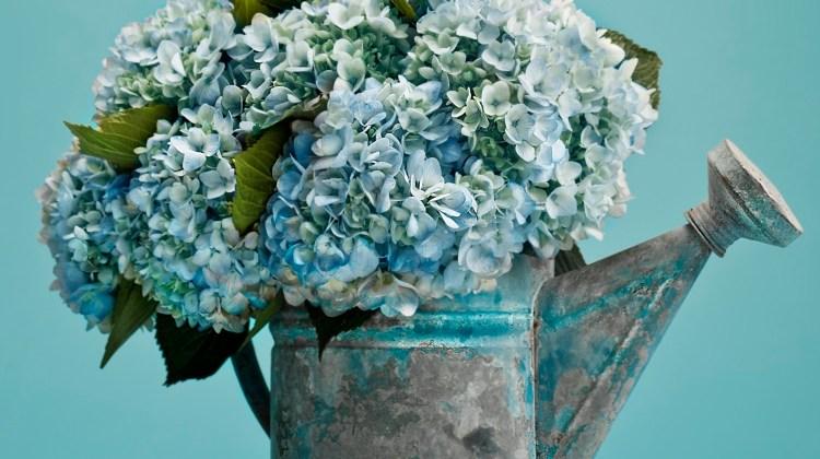 hydrangea arrangements