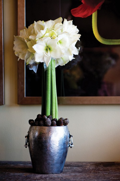 white amaryllis arrangement, amaryllis topiary