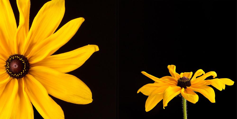 Susan michals flowers in transition flower magazine when photographer mightylinksfo