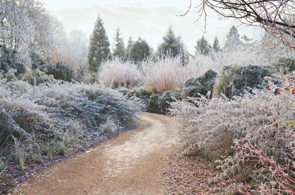 charlotte moss, winter gardens