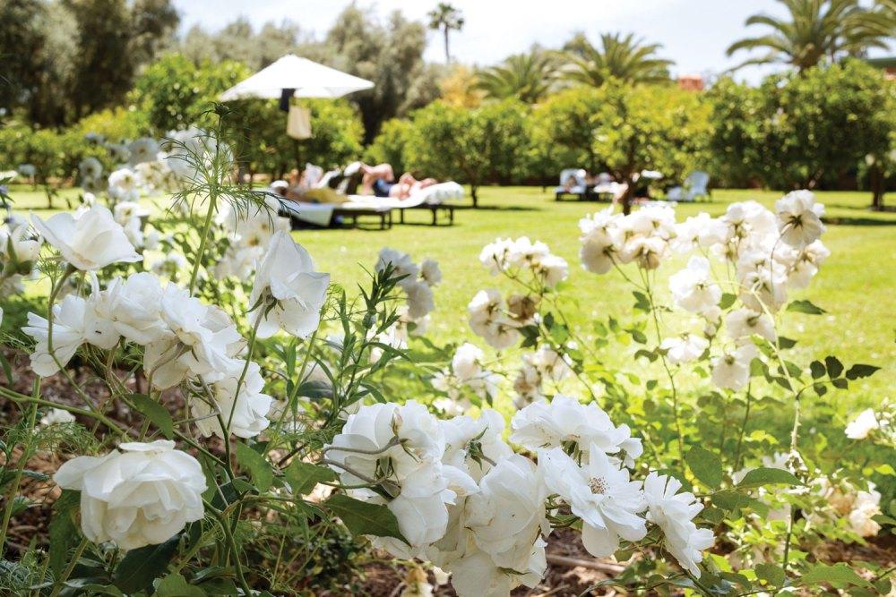 la mamounia hotel gardens