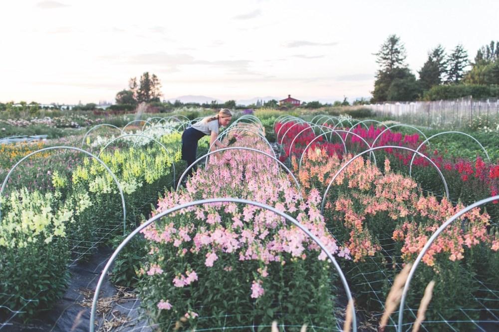 Floret Farm S Field To Vase Movement Flower Magazine