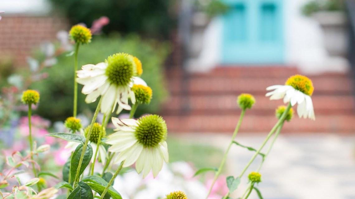 spring gardening tasks
