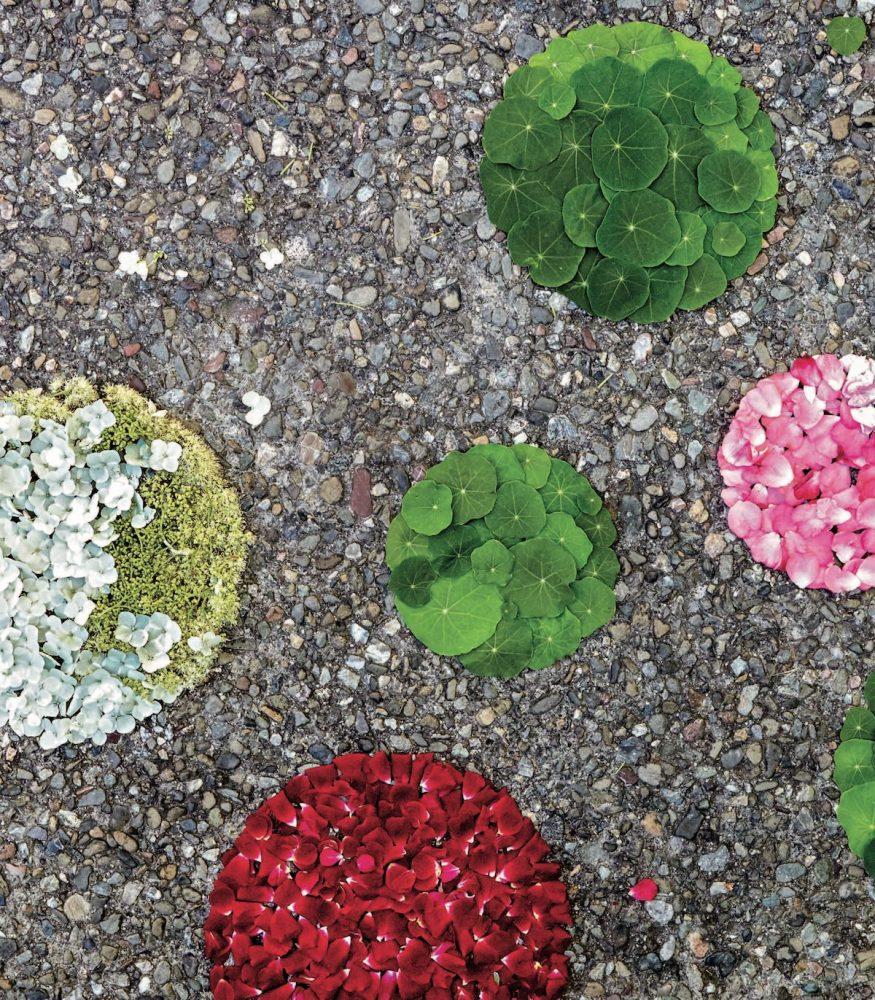 petal puddles
