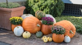 pumpkin varieties, ornamental pumpkins
