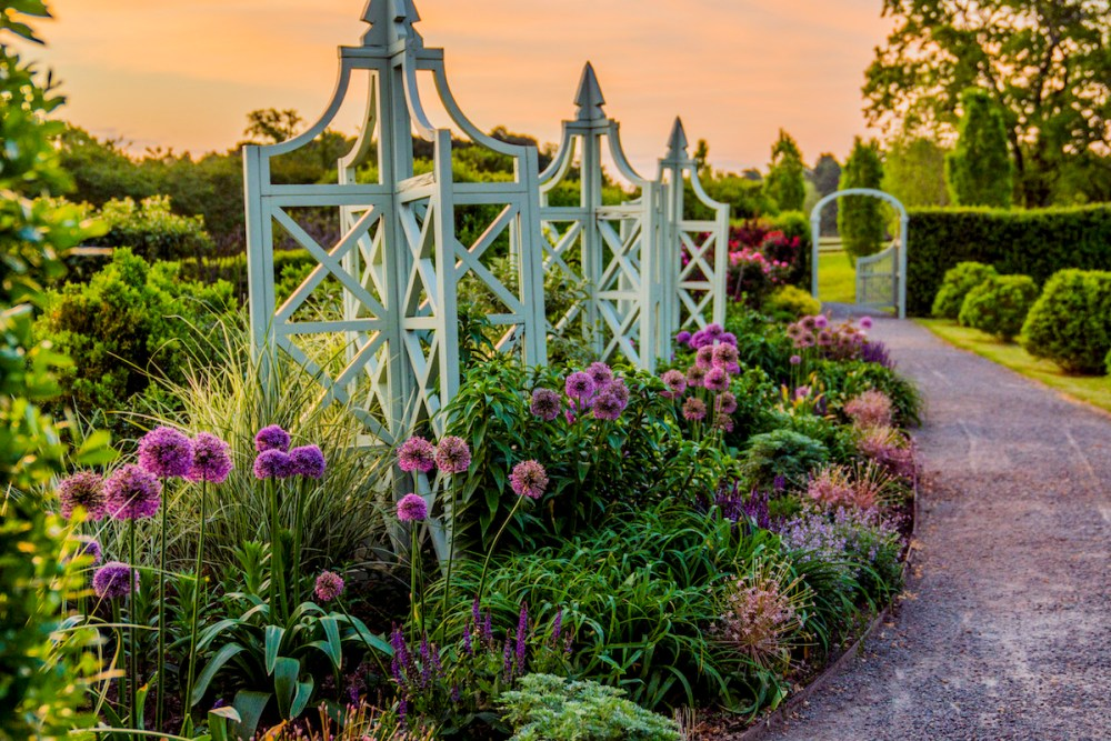 alliums to plant in fall, bulbs for fall planting