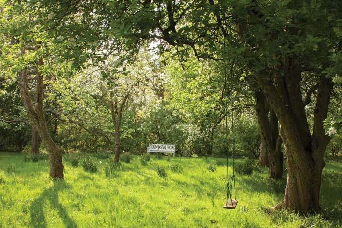 Dappled sun falls on Melissa McGrain's orchard, designed by the late Fletcher Steele. A white wooden bench and a tree swing provide a respite.