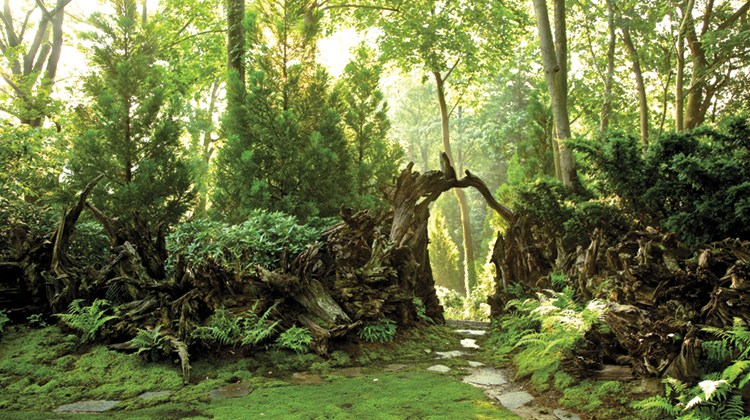 """For a property in Scarsdale, New York, Jorge Sánchez transplanted stumps of slash pines from Florida and added mosses and evergreens to create a graceful hideaway """"stumpery."""""""