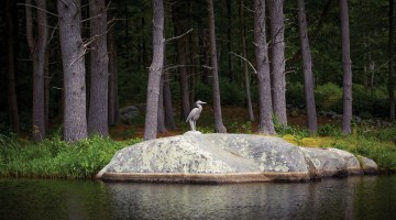 Pennoyer Newman replicated a sculpture by 19th-century American landscape painter Frederick Church for the lightweight and durable Great Blue Heron, suitable for a garden or pond. The company donated its first replica of the bird to the North Shore Wildlife Sanctuary on Long Island.