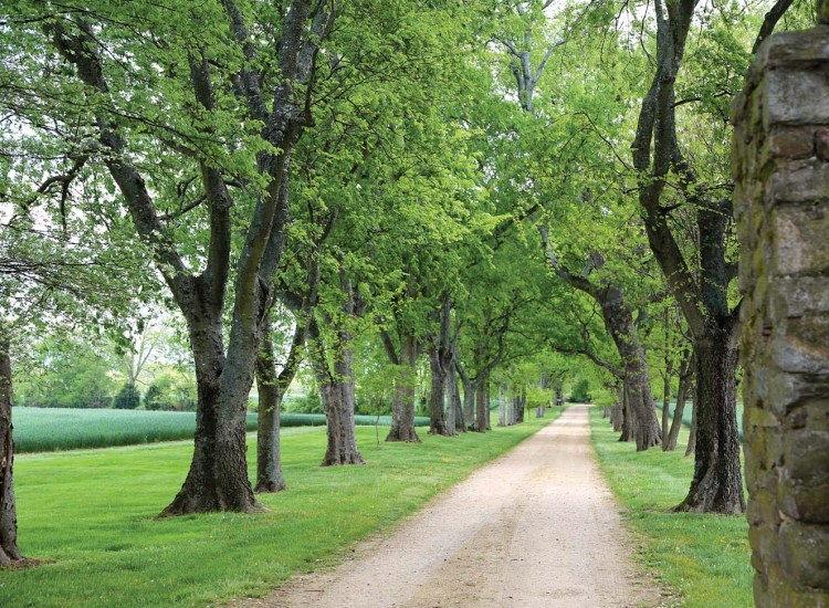 dirt road lined by oak trees at Westover Plantation