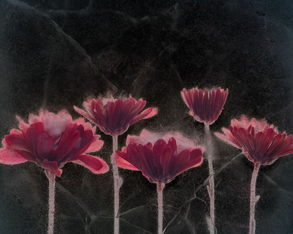 """Asters,"" inverted luminosity"