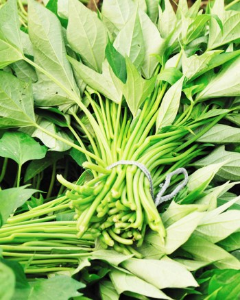 bunches of green sweet potato vines for sale at a farmers market