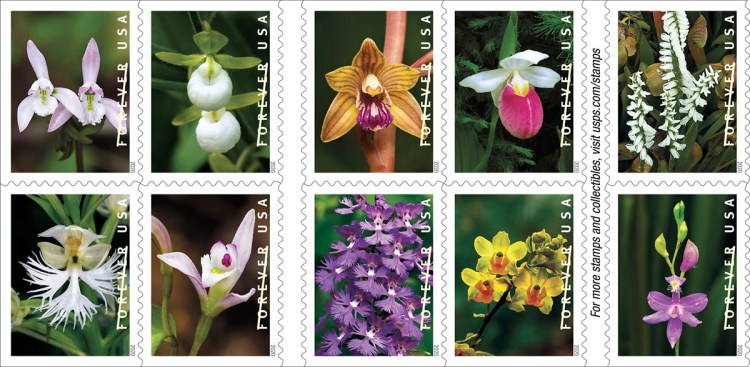 The 10 designs in the new USPS collection of wild orchid stamps