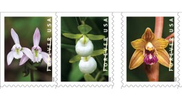 wild orchids forever stamps