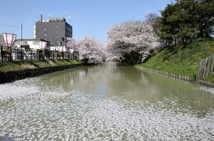 【熱血背包女】2015東北追櫻之旅~絕美名勝弘前公園大滿開 幸運看到粉紅花瓣護城河!