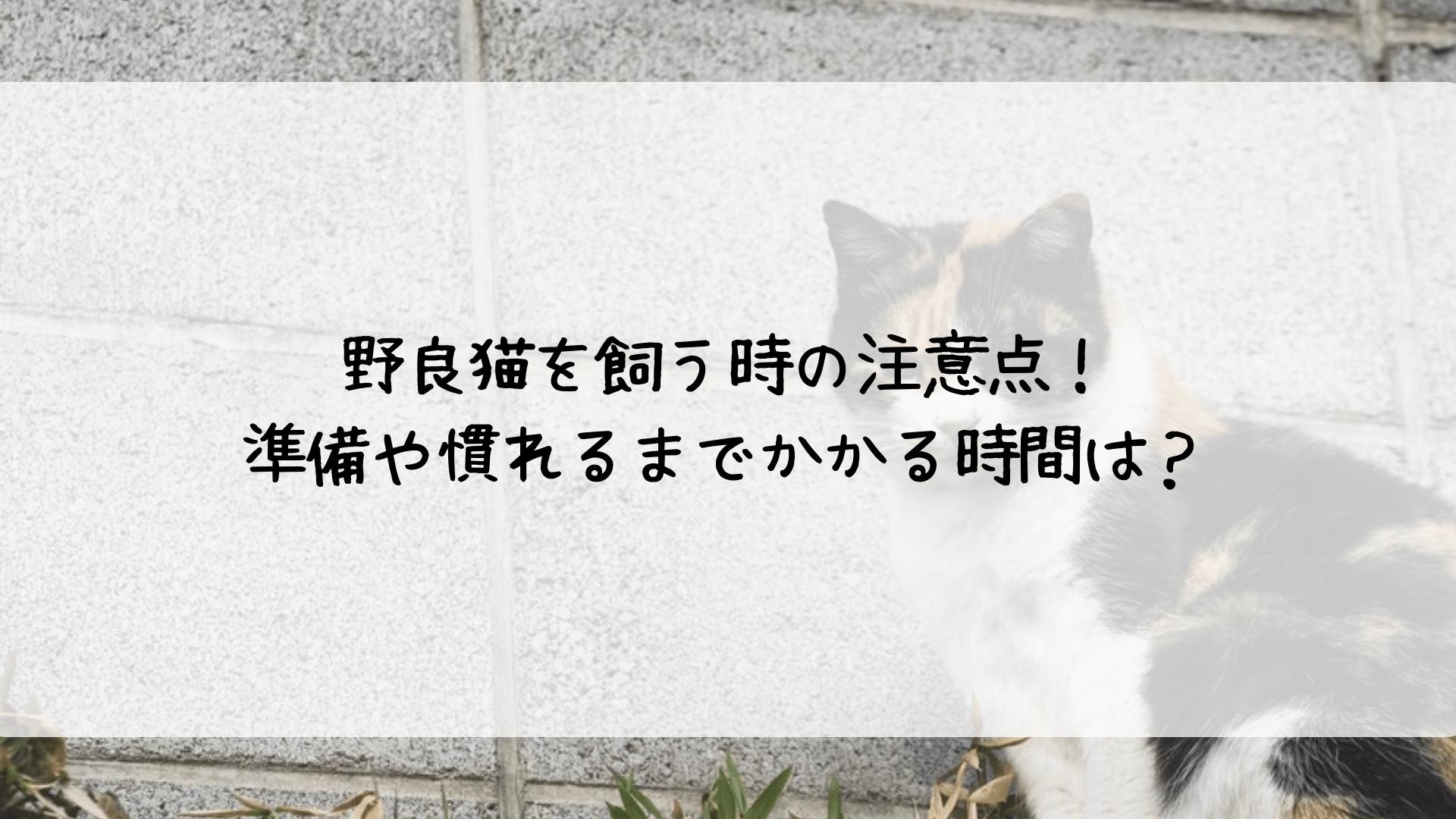 野良猫 飼い方