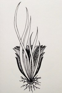 Flowerosity sketch #77