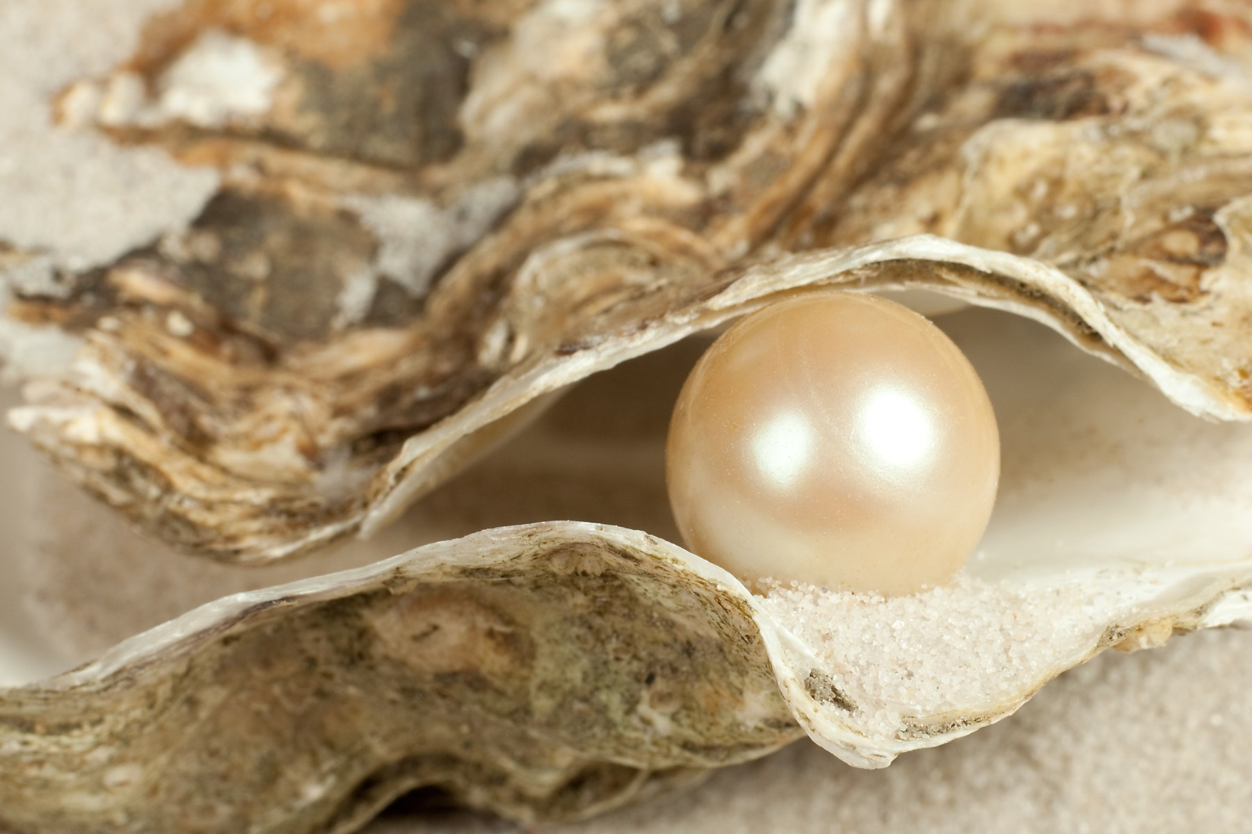 pearl wisdom (pearl in oyster)