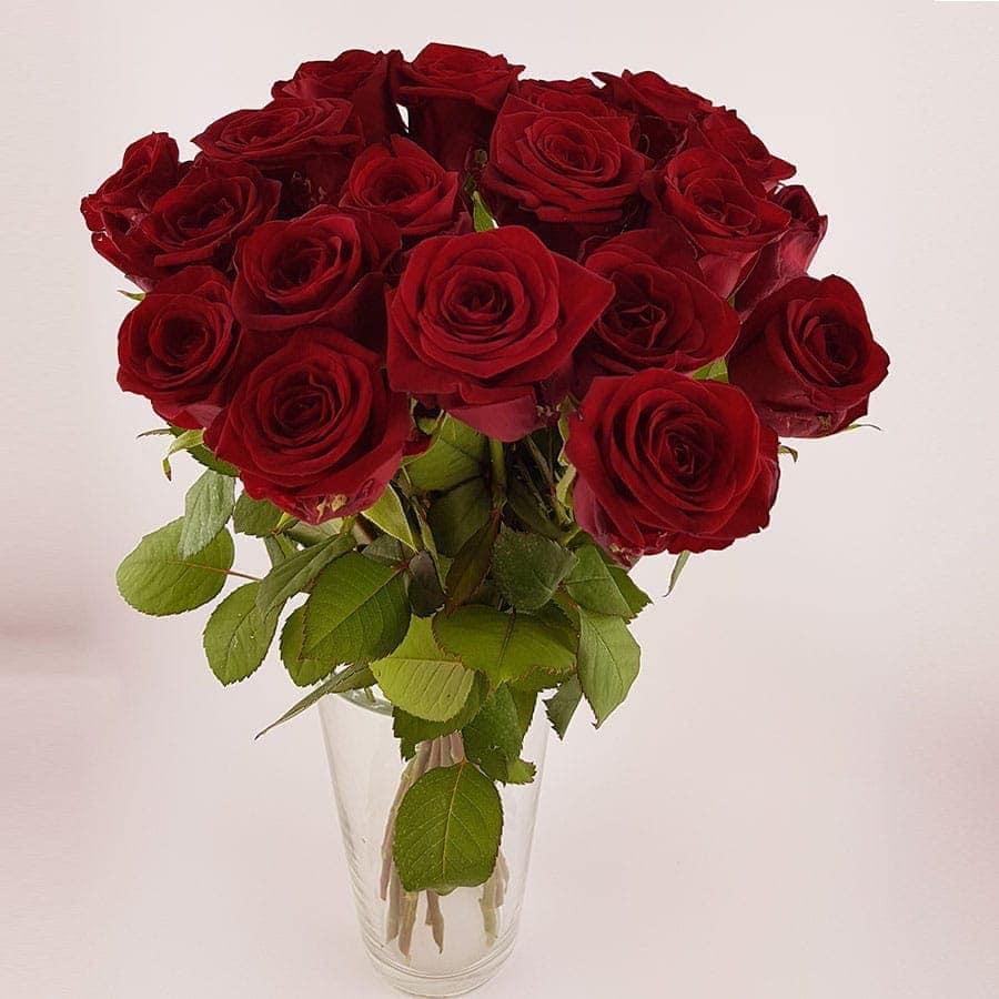 20 Stück rote Rosen ~ flowerpower Graz