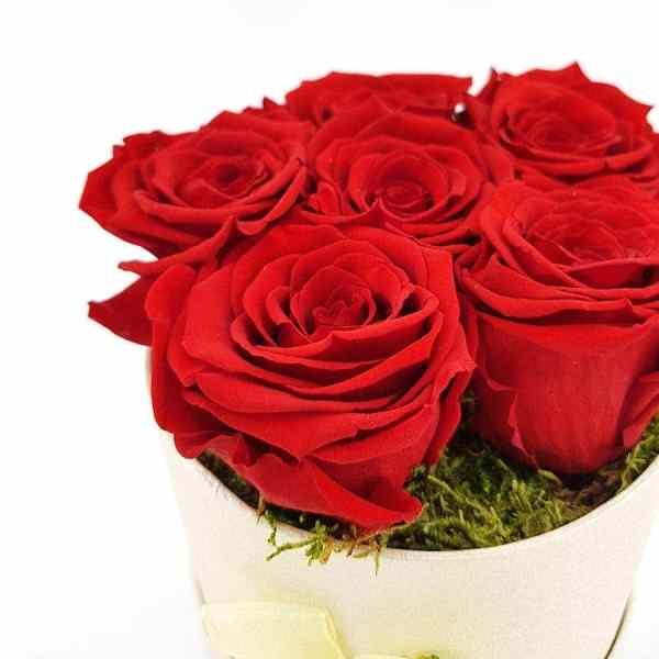 Rosenbox 6x Ewige Rose rot