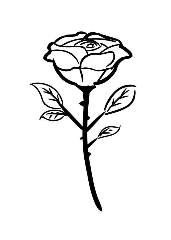 Раскраска роза цветок для детей Как нарисовать бабочку