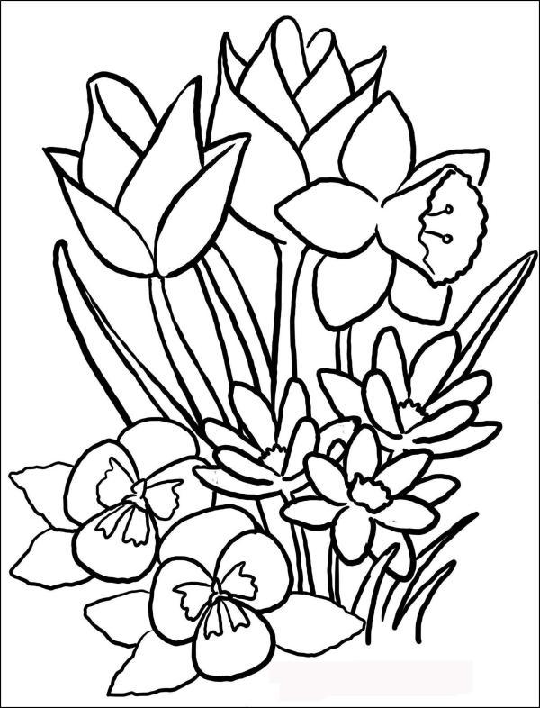 Цветы Картинки Для Детей Раскраски