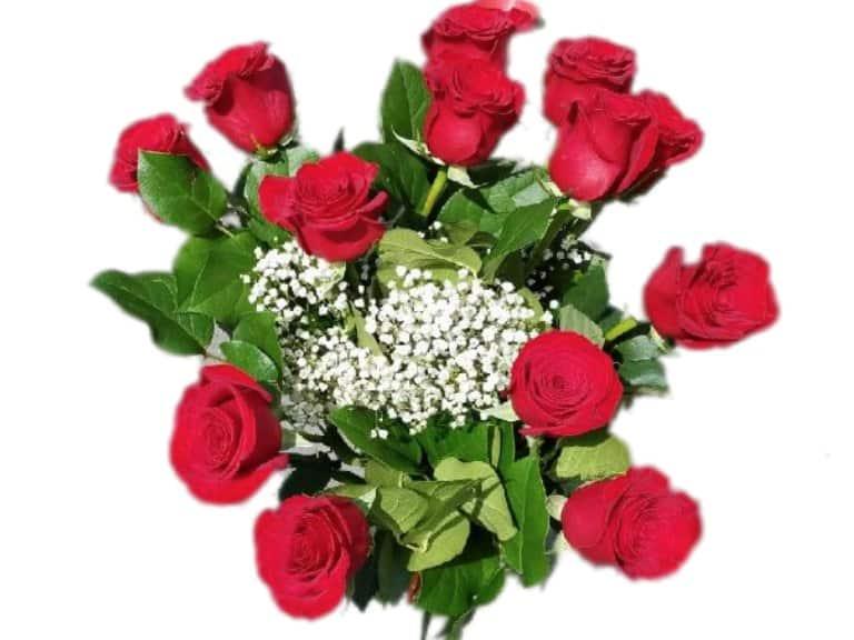 dozen roses gallery