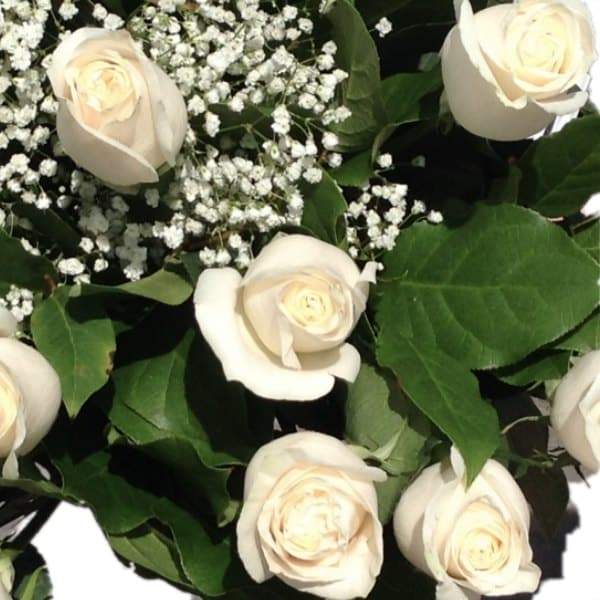 Dozen white roses flowers avalon white roses white roses gallery mightylinksfo