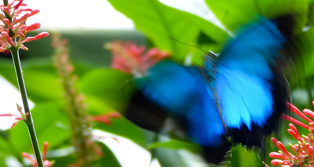 Wildlife in the Garden: Butterflies