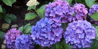 flowering plants for kids