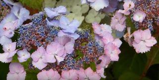 flowering plants for sale