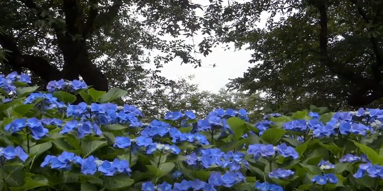 flowering plants for shade