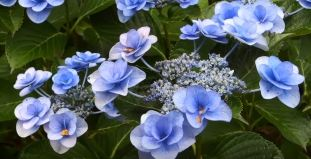 flowering plants of arizona