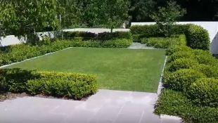hedge bushes