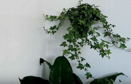 indoor plants good for air quality