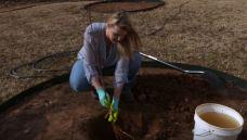 planting a garden in november