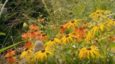 plants and flowers for bees