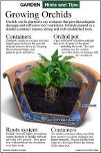 orchid plant pot