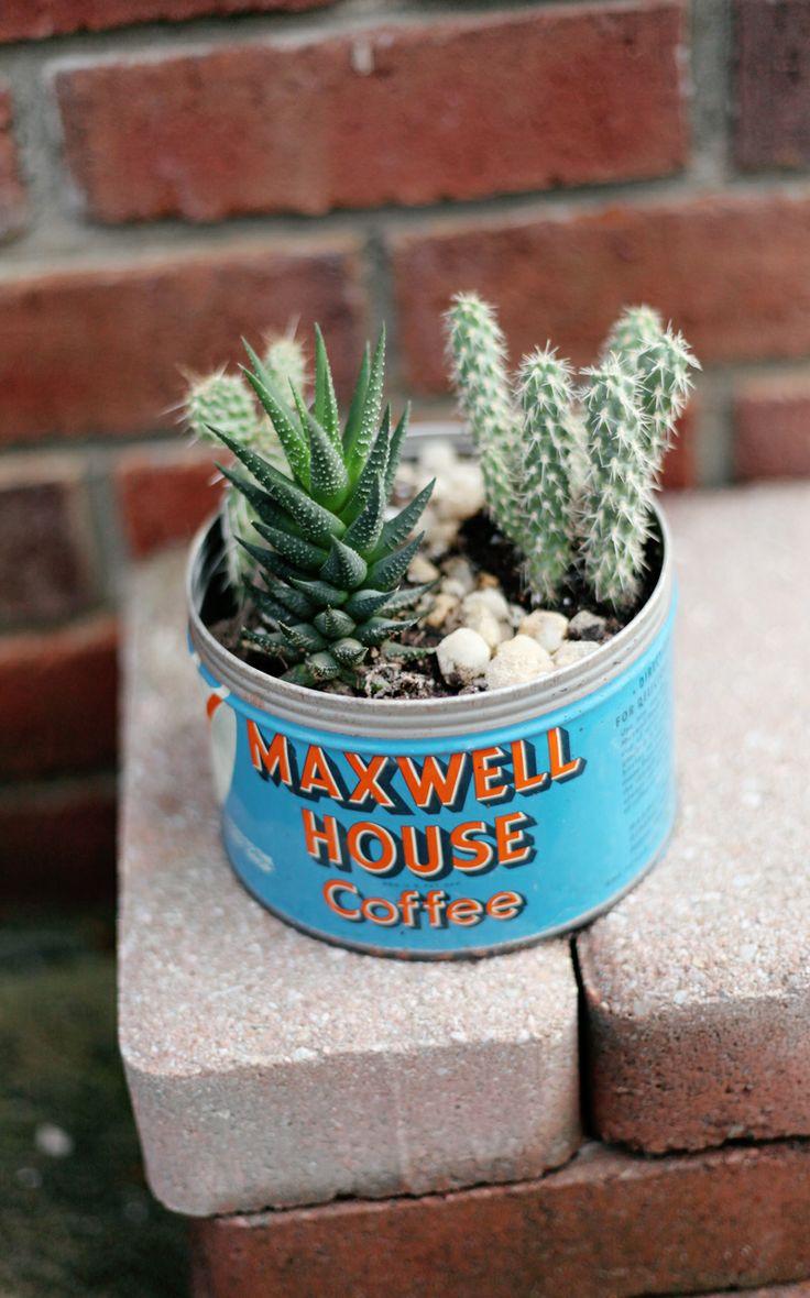 small succulent plants