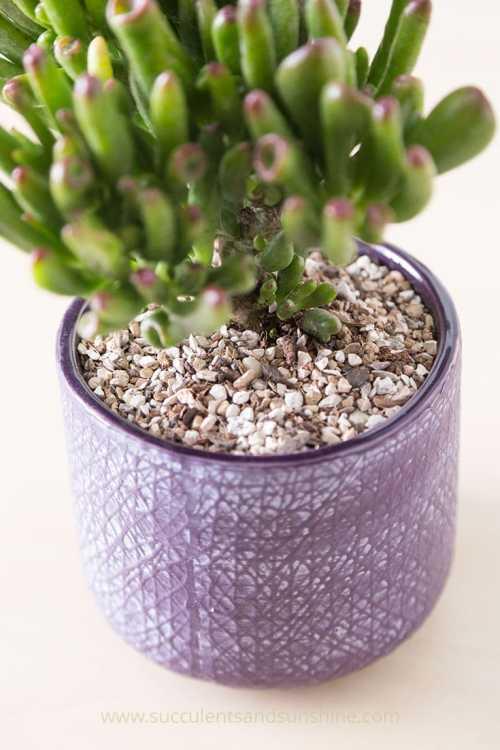 succulent fertilizer