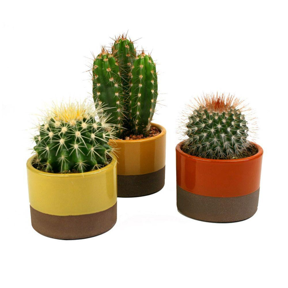 at-home-cactus