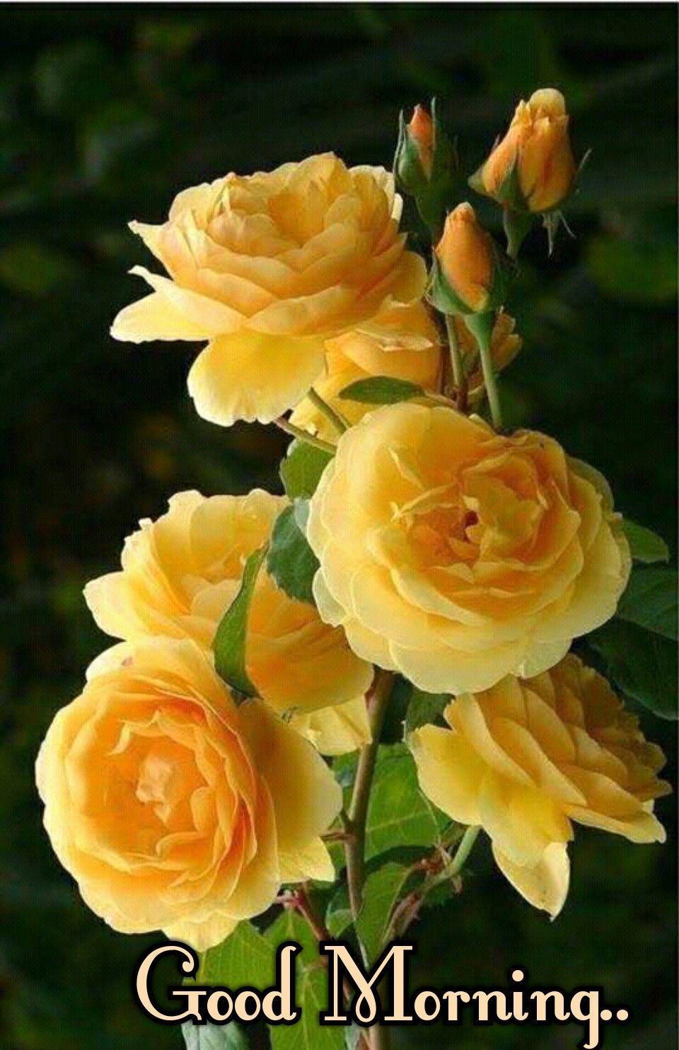beautiful-yellow-rose-flower