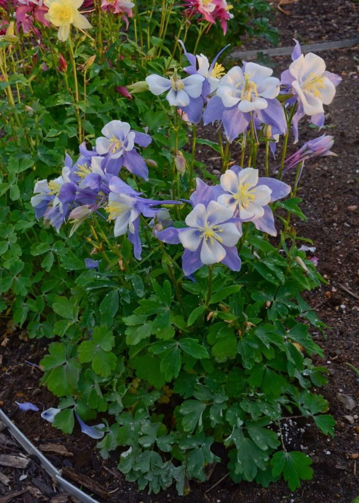flowers-that-grow-in-the-shade