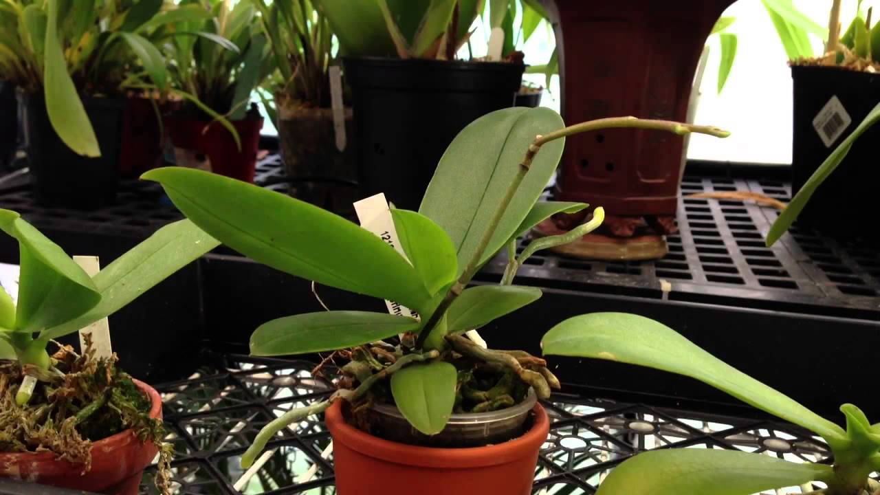 how-to-care-for-an-orchid