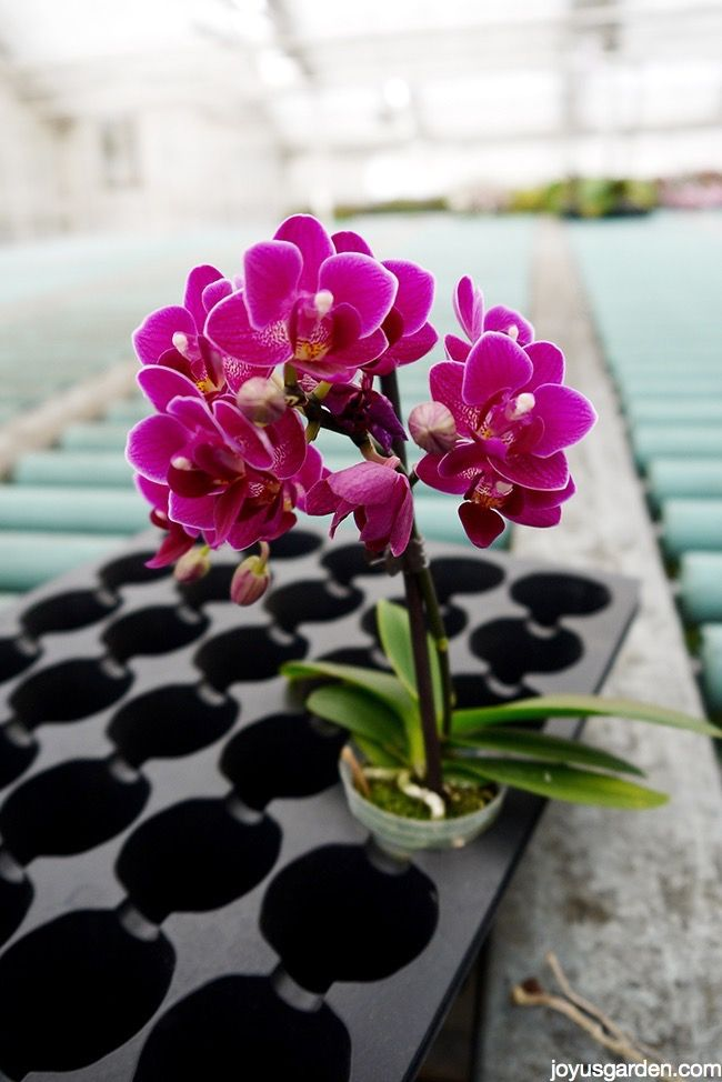 how-to-care-for-indoor-orchids