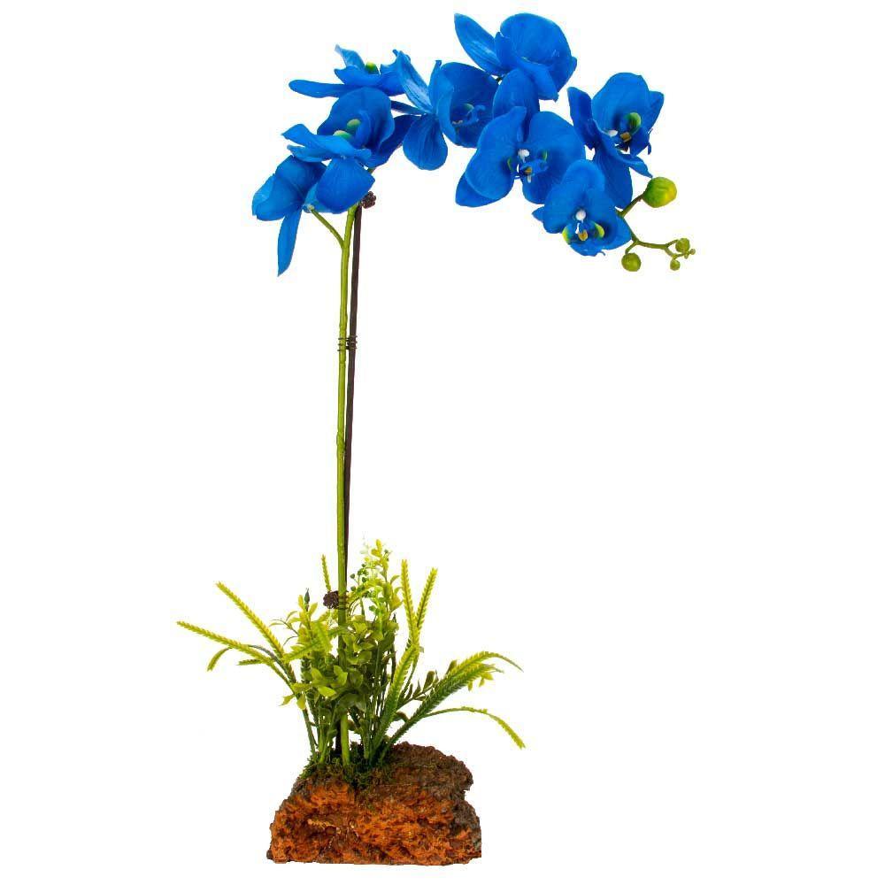 mini-orchids-home-depot
