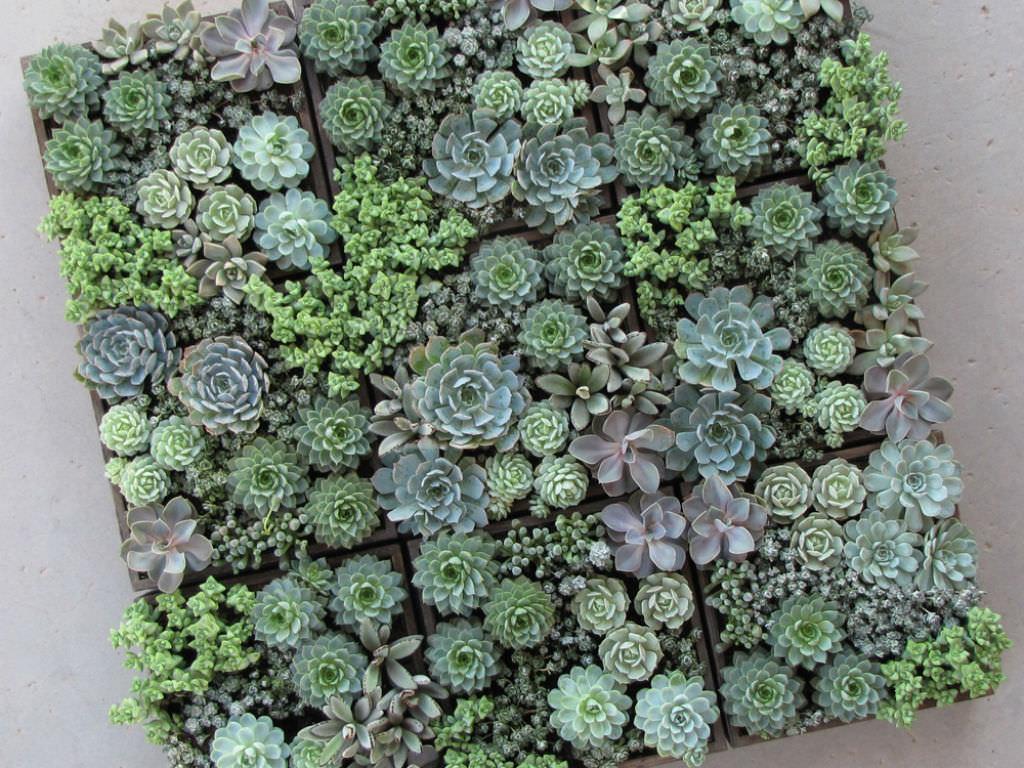 mini-succulent-care
