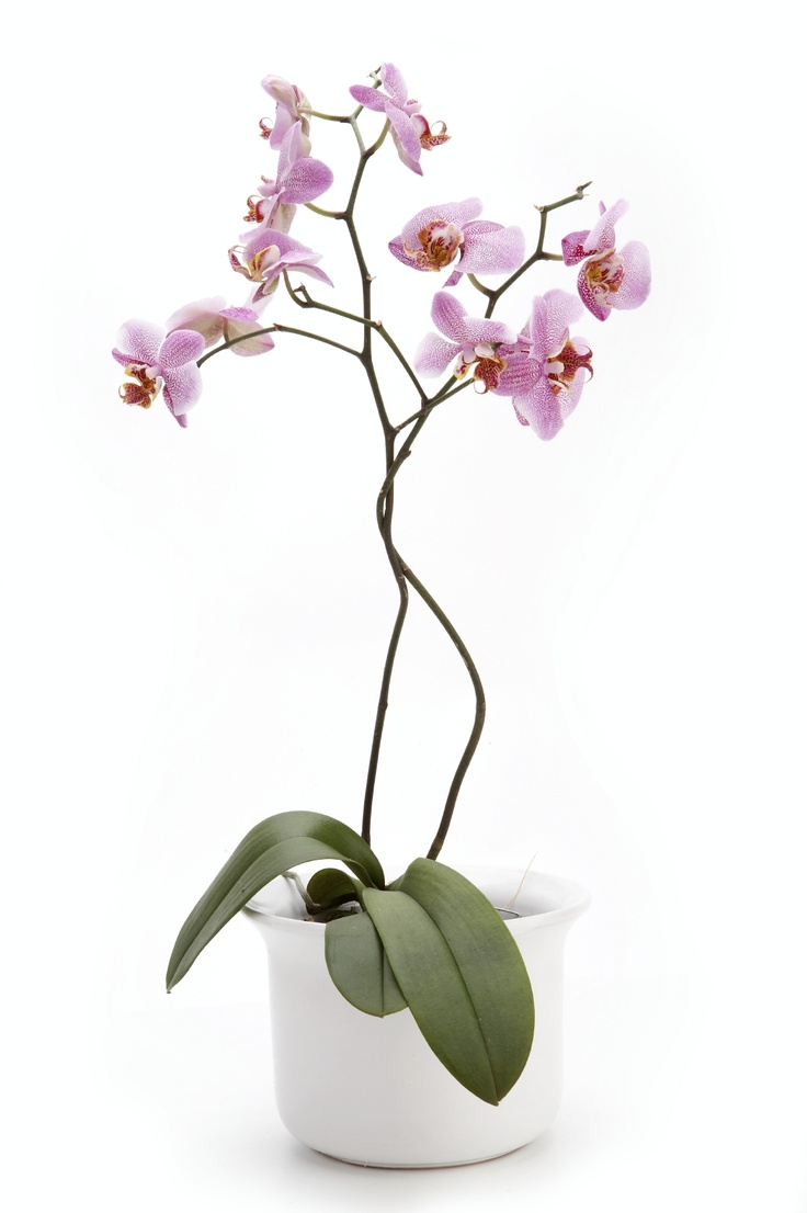orchid-care-indoor