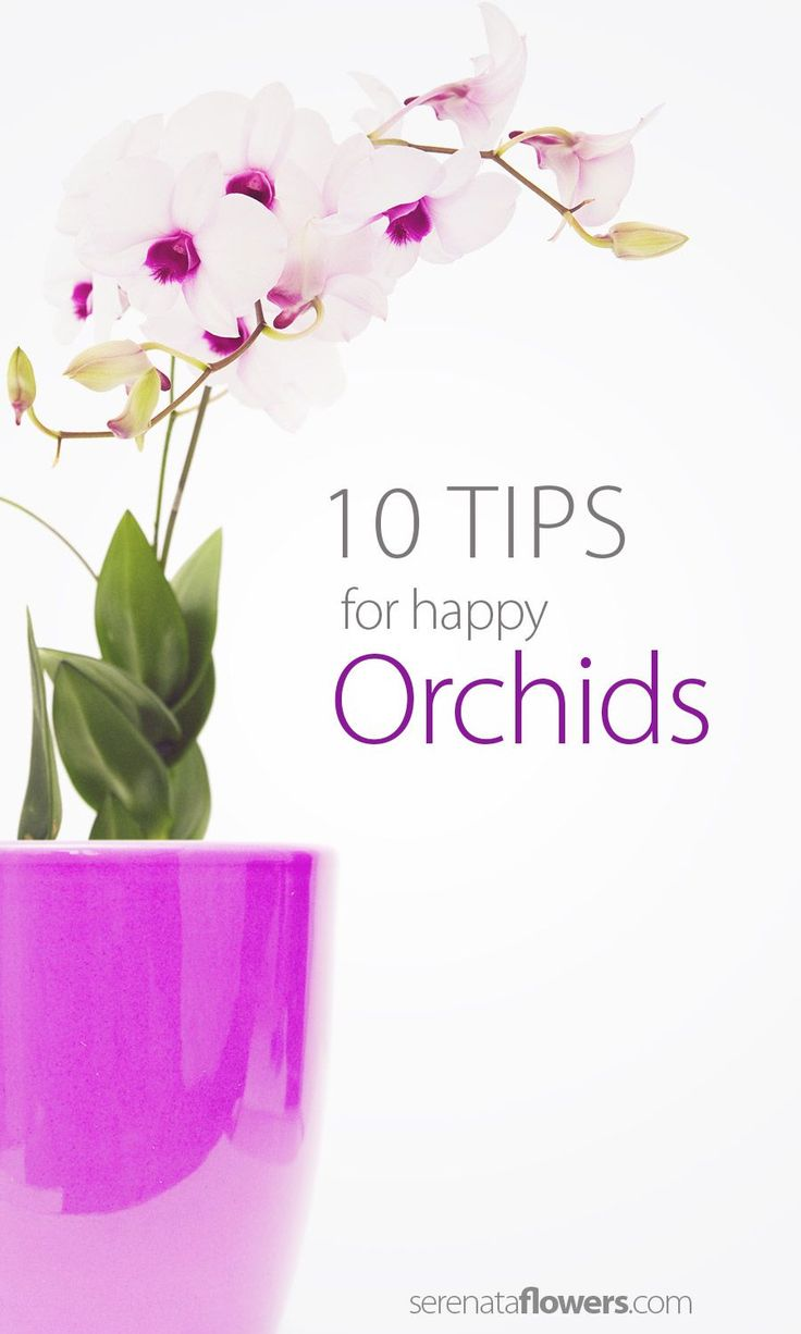 orchid-how-to-take-care